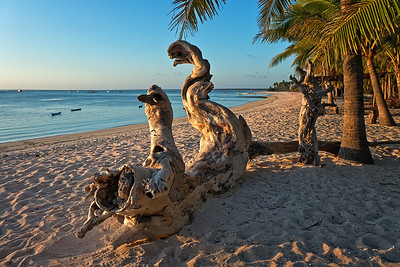 Driftwood wave, Nembrala beach, Rote Island, Indonesia.