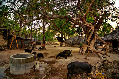 """Pigs & Well""  Rote Island, Indonesia. September 2012."