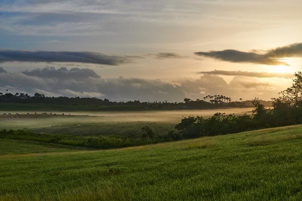 Redlands 1 - Early Morning Mist