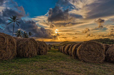 Golden Hay #sunrise #travel #seascape  #barbados