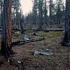 Metsäpalon jälkeen, Vätsäri_ Efter skogsbranden_ After fire