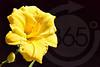 Dahlonega_Flower__2323