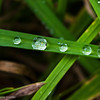 Waterdroplets lining up