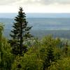 Metsämaisema- Skogslandskap- Landscape