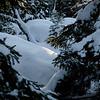 Talvimetsä- Vinterskog- Winterforest