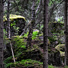 Kuusikko- Granskog- Spruces