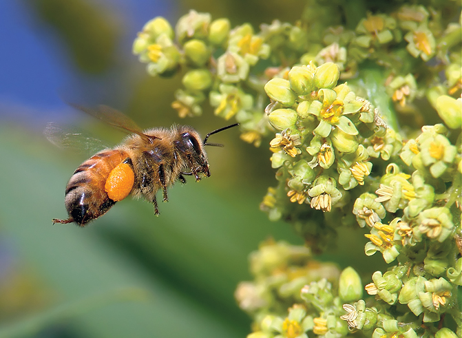Bizzy Bee