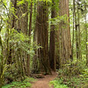 Redwood National Park, CA