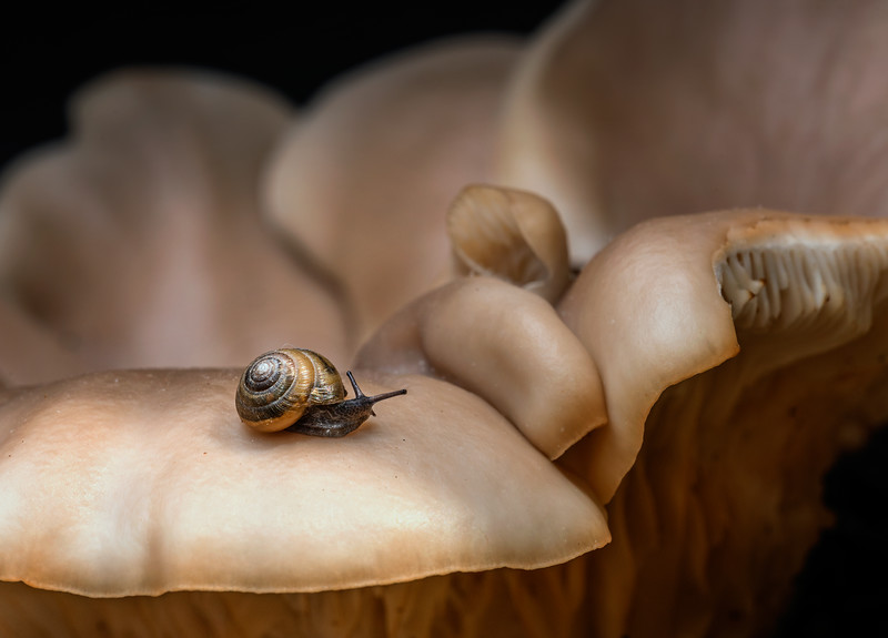 fungi ride