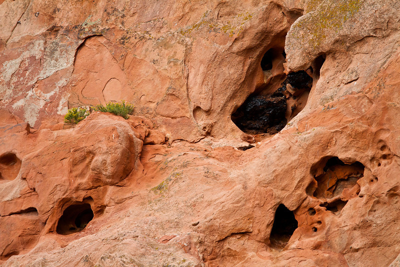 Evidence of animals in the Garden of the Gods.