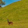 Red Deer - still watching