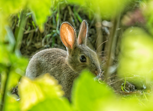 Hare you are.