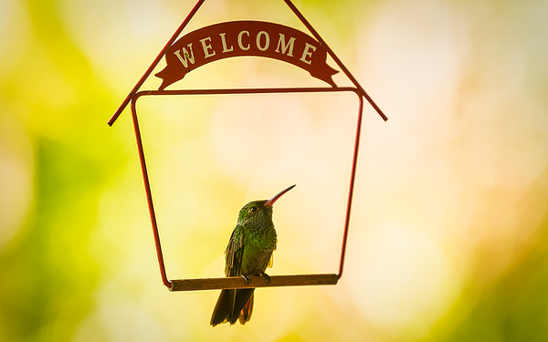 Welcoming Hummingbird