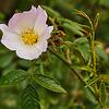 Wild Flowers - Ennerdale
