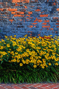 Bricks and Black-Eyed Susans
