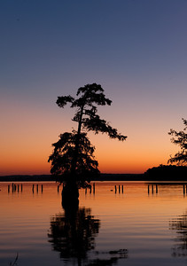 Reelfoot Lake, TN