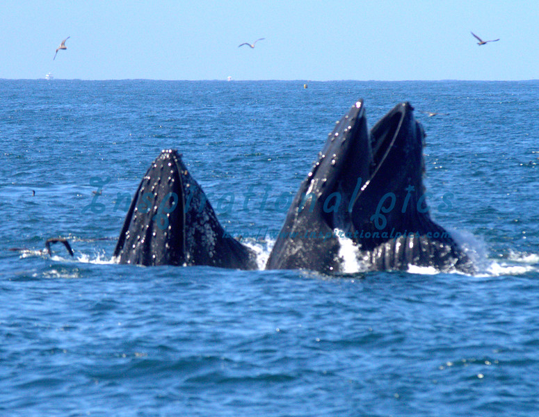 2014.08.30 Whale Watching Exports