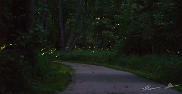 Fireflies dart through the darkness along Beaver Creek