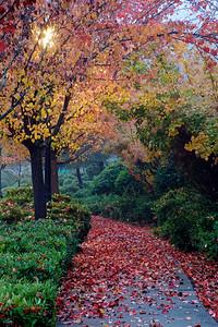 PF-181201-0002 Fall Colors