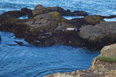 FB-180526-0002 Relaxing Seals