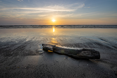 Driftwood at Sunrise