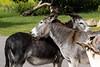 Donkey Hug