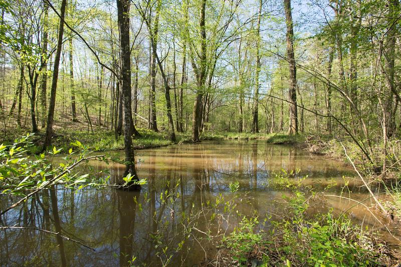 small pond near paw paw trees