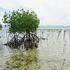 Malizia Mangrove Park