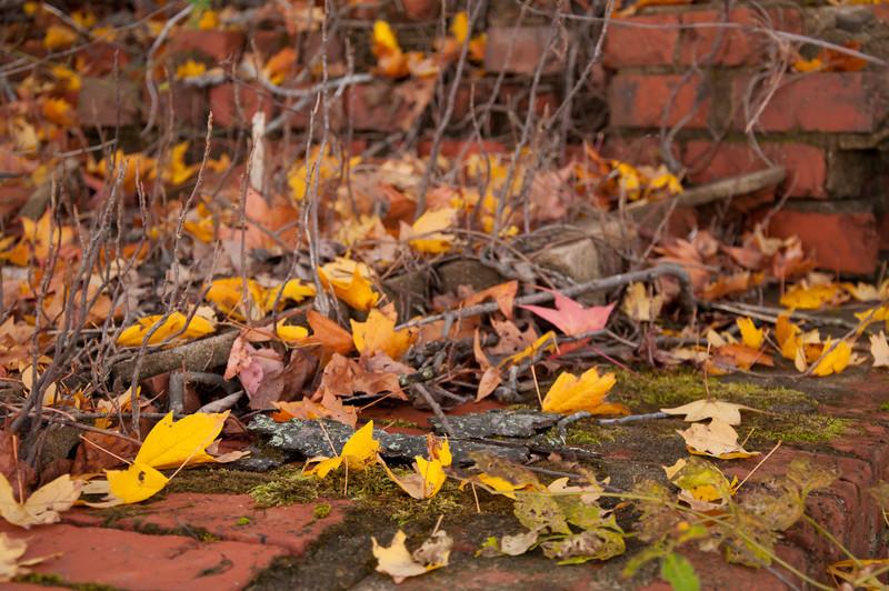 Bricks In Fall - Falls Lake.<br /> best print size - 8x12 or 12x18