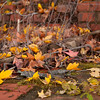 Bricks In Fall - Falls Lake.<br /> best print size - 8x12 or 12x18