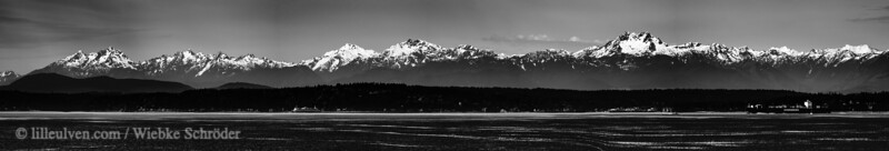 Black and White Panorama from Belltown Seattle