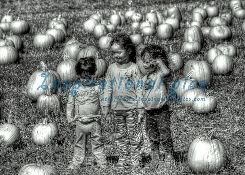 Pumpkin Patch Girls HDR