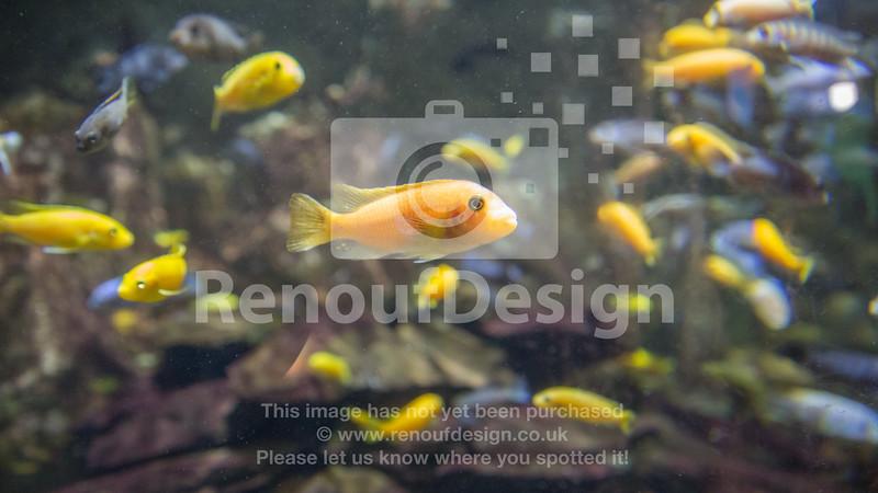 The Fish 5