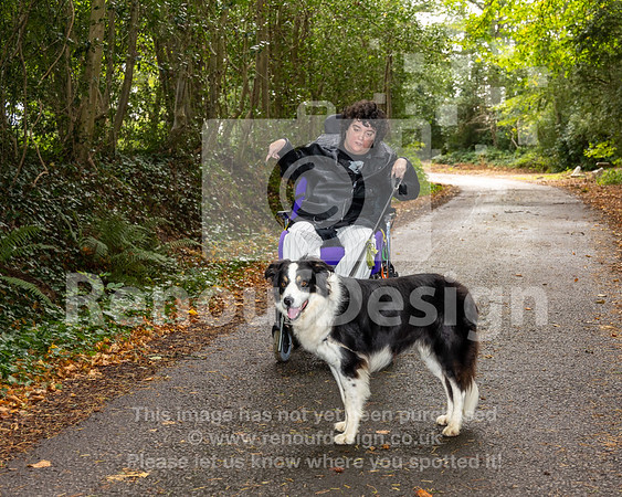 Sam and Sparky exploring the New Forest  - 12