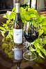 Pickens_Fainting Goat Vineyards_3649