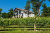 Pickens_Fainting Goat Vineyards_3654