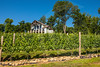 Pickens_Fainting Goat Vineyards_3657