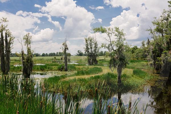 Mossy Pond Retrievers-8455