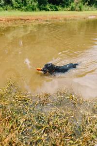 Mossy Pond Retrievers-8550