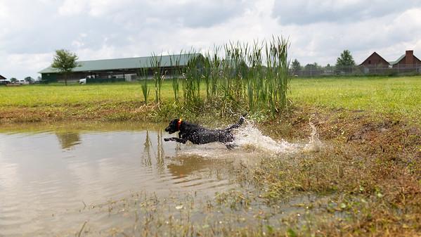 Mossy Pond Retrievers-8561