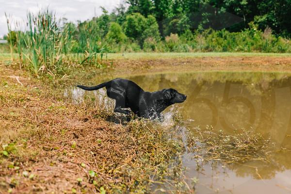 Mossy Pond Retrievers-8592