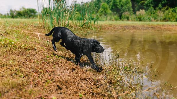 Mossy Pond Retrievers-8614
