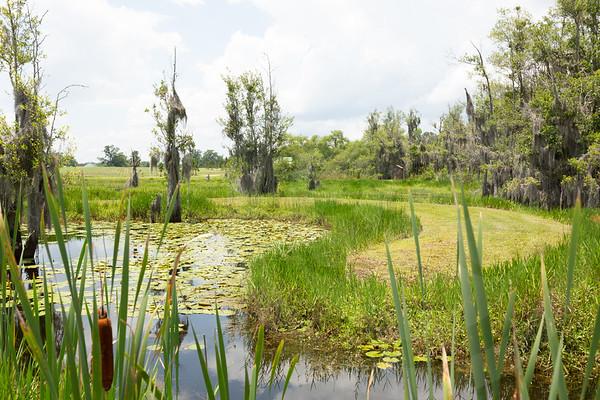 Mossy Pond Retrievers-8444