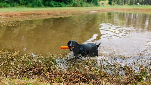 Mossy Pond Retrievers-8523