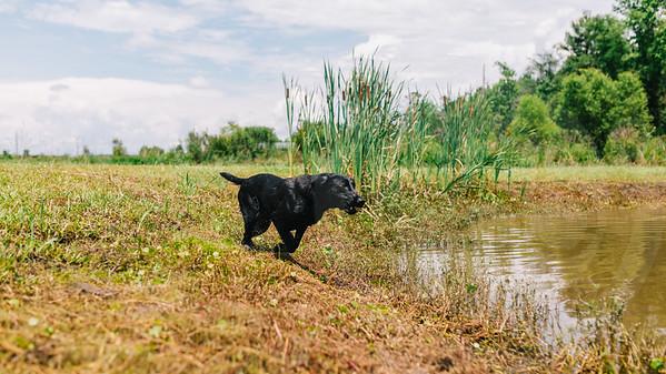 Mossy Pond Retrievers-8613