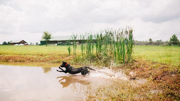Mossy Pond Retrievers-8538