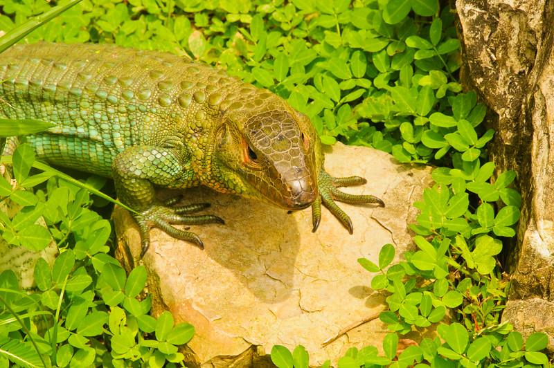 Reptile Park-8
