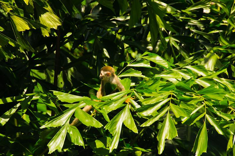Sloths and monkeys-16
