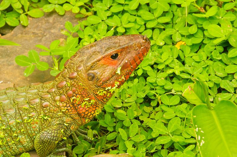 Reptile Park-20