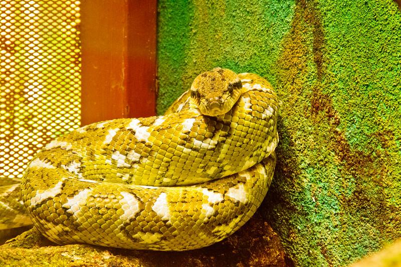 Reptile Park-12